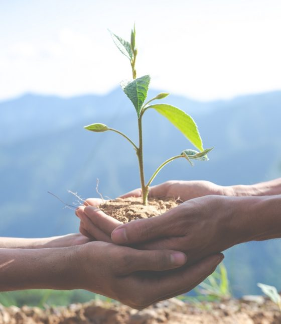 concept-of-environmental-conservation-in-the-garden-for-children